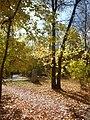 Autumn trees at Zelenaya Roscha 2010.jpg