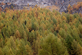 Gran Paradiso National Park - Autumn colors in the Park