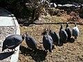 Aves - panoramio (1).jpg