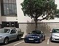 BMW M3 (24258316788).jpg