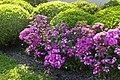 Backlit Flowers Shrubs & Weeds (4519538152).jpg