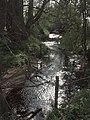 Backlit stream near Anslow - geograph.org.uk - 400779.jpg