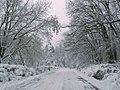 Baneasa winter (2418944248).jpg