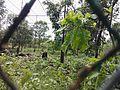 Bangabandhu Sheikh Mujib Safari Park (24).jpg