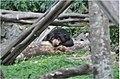 Bear (9638652964).jpg