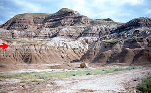 Horseshoe Canyon Formation - Contact (red arrow) between the underlying marine shales of the Bearpaw Formation and the coastal Horseshoe Canyon Formation. Coal beds (black bands) are common in the Horseshoe Canyon Formation and were formed in coastal swamps.