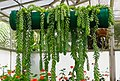 Beautiful Hanging Plants.jpg