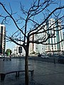 Beauty of tree without leaves.jpg