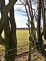 Beech Boundary - geograph.org.uk - 1706550.jpg