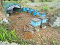 Beekeeping in Hainan - 03.jpg
