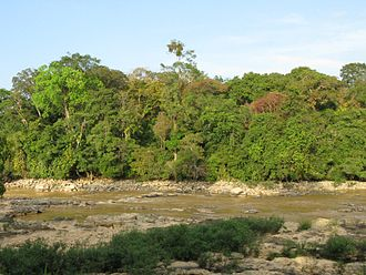 Cát Tiên National Park - Trees next to Ben Cu rapids at the beginning of the dry season: showing forest structure