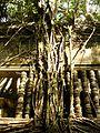 Beng Melea, Cambodia (2212300924).jpg
