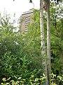 Berg en Dal (Groesbeek) Watertoren (03).JPG