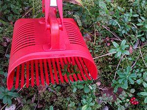 Berry-picking rake - A berry-picking rake, collecting lingonberries