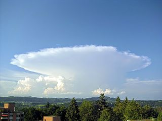 Cumulonimbus capillatus cloud species