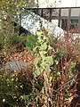 Big plant - panoramio (3).jpg