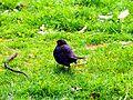 BirdOnGras.JPG
