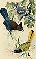 Bird lore (1919) (14747947614).jpg