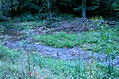 Bixby-State-Preserve Clayton-County,-Iowa Sunday,-September-4,-2011 a.jpg