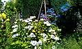 Blütenträume - panoramio.jpg