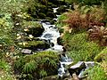 Black Forest- brook (10562158363).jpg