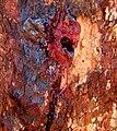 Bloodwood Bleeding.jpg