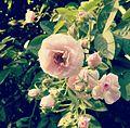Blooming Spring.jpg