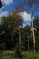 Bois d'Acren 07.jpg