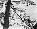 Boom in een bos op de Veluwe, Bestanddeelnr 252-0571.jpg