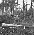 Bosbewerking, arbeiders, boomstammen, werkzaamheden, Bestanddeelnr 251-7852.jpg