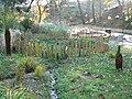 Boscombe Chine Gardens, wildlife pond - geograph.org.uk - 619603.jpg