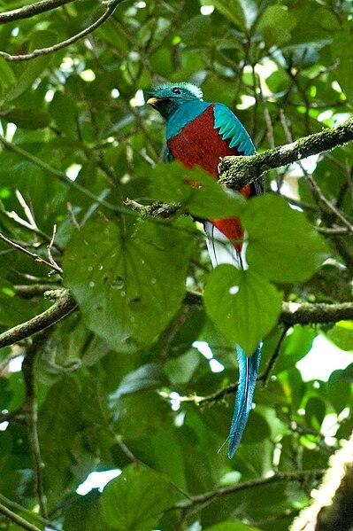 File:Bosfoto Quetzal.jpg