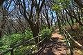 Bosque del Cedro, Garajonay.jpg