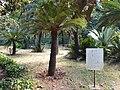 Botanical garden El'Hamma 7.jpg