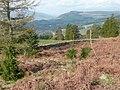 Boundary dry stone wall to Ballechin Wood - geograph.org.uk - 786368.jpg
