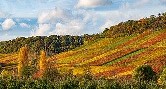 Brackenheim - Stockheim - Weinberghang südlich des Schlosses Stocksberg von SO.jpg