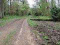 Bridleway in Breamore Woods - geograph.org.uk - 1279711.jpg