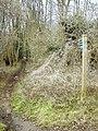 Bridleway through the woods - geograph.org.uk - 1163159.jpg