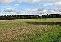 Briningham Plantation - geograph.org.uk - 989084.jpg
