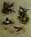 British birds - (20355745475).jpg