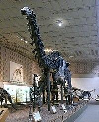 Brontosaurus Yale Peabody cropped.jpg