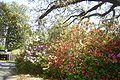 Brookgreen Gardens44.jpg