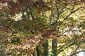 Buche Hartenaugasse Graz 1123 (2).JPG
