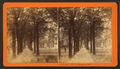 Bull Street, Savannah, Ga, from Robert N. Dennis collection of stereoscopic views 3.png