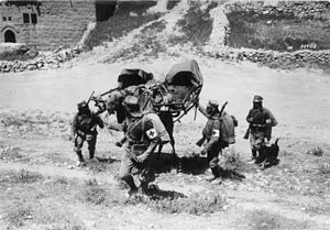 Asia Corps - Medics from Asia Corps carrying a wounded soldier with camel (Palastine/May 1918).