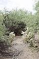 Butcher Jones Trail to Pinter's Point Loop, Tonto National Park, Saguaro Lake, Ft. McDowell, AZ - panoramio (85).jpg