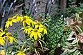Butterfly Rainforest FMNH 20.jpg