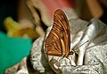 Butterfly and Clothes (2577790965).jpg