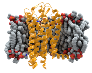 CCR5 protein-coding gene in the species Homo sapiens