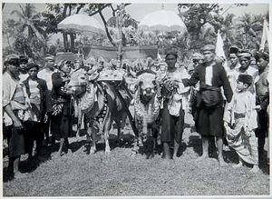 Karapan sapi - Karapan sapi festivities on Madura, 1932